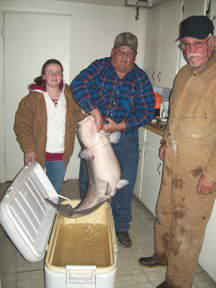 65 pound 2 ounce Blue Catfish caught by a 12 year old girl at Lake Buchanan